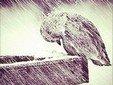 С благодарностью терпи скорби, чтобы ими загладились все твои грехопадения