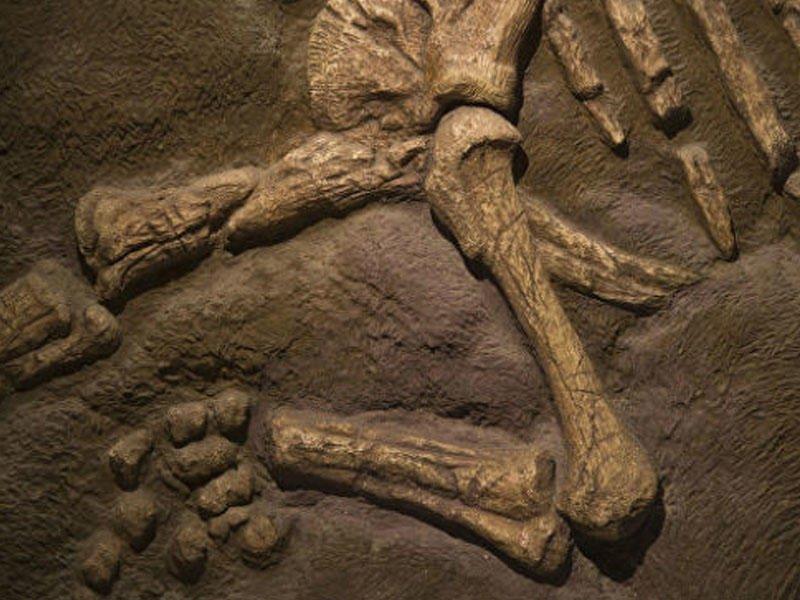 Обнаружены останки нового вида динозавра, «непохожего нинаодно существо вмире»