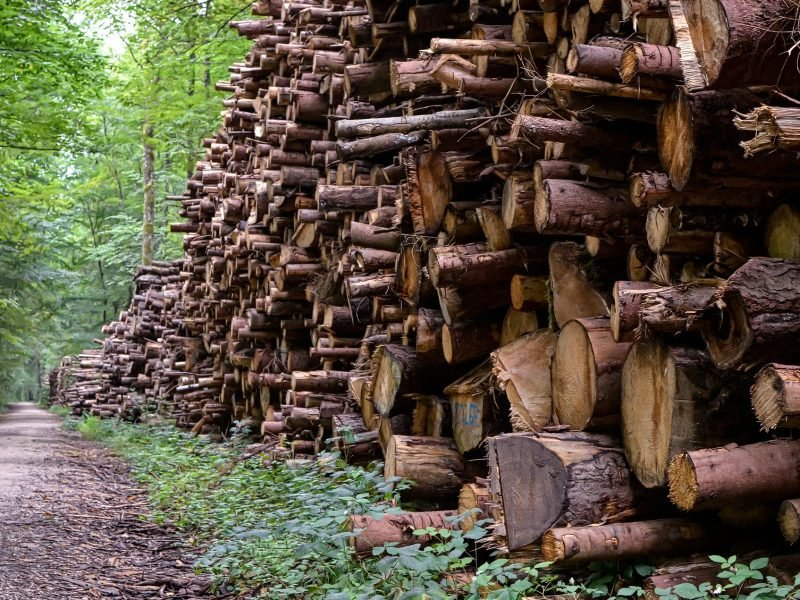 ОПГ вывезла за границу лес на 690 млн рублей